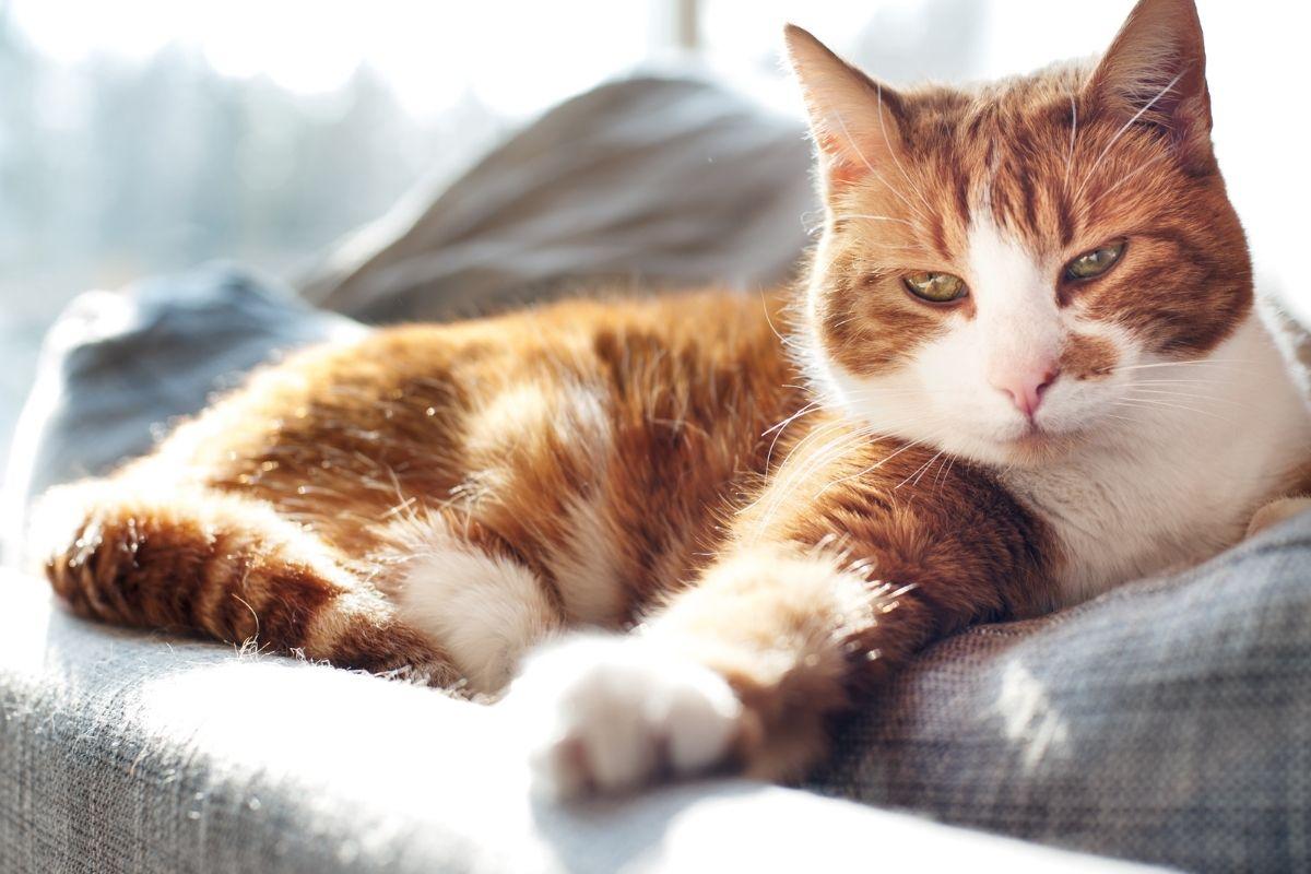 do indoor cats get fleas