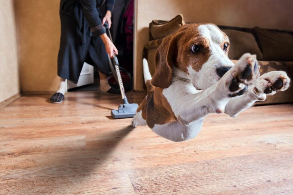 dog jumping with vacuum in background