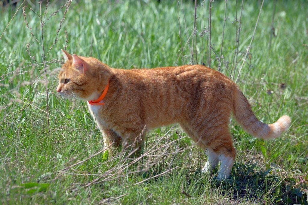 ginger cat on grass