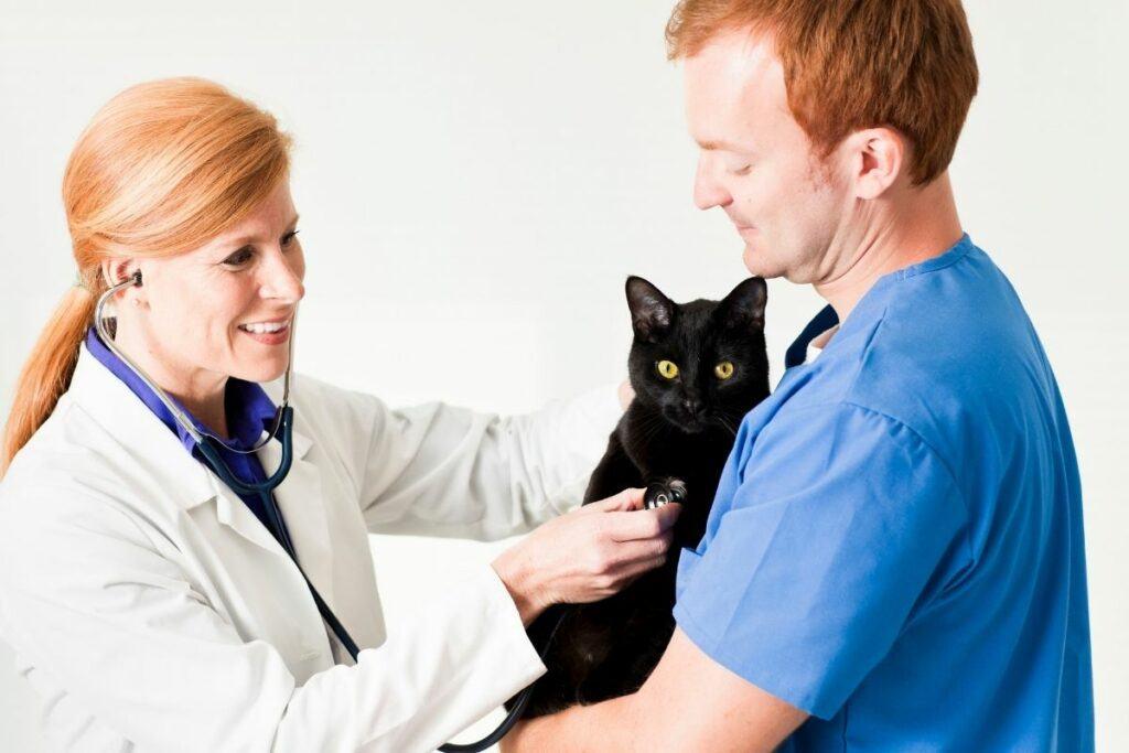 vet holding black cat