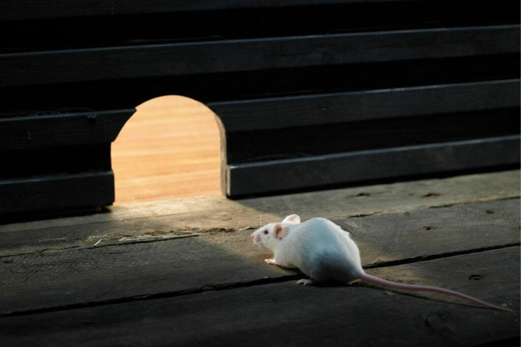 white mouse and mouse hole