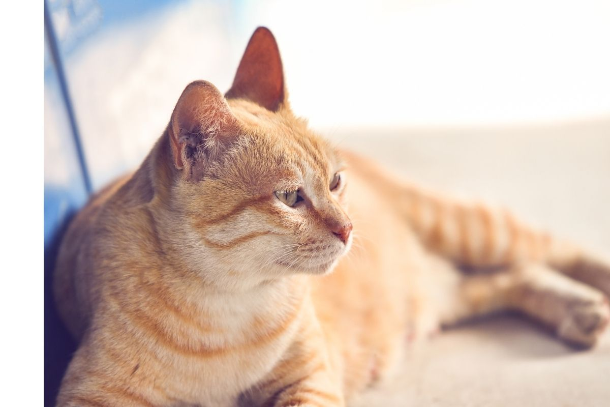 homeopathy for cats