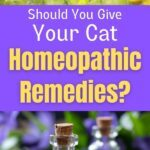 homeopathic remedies for your cat