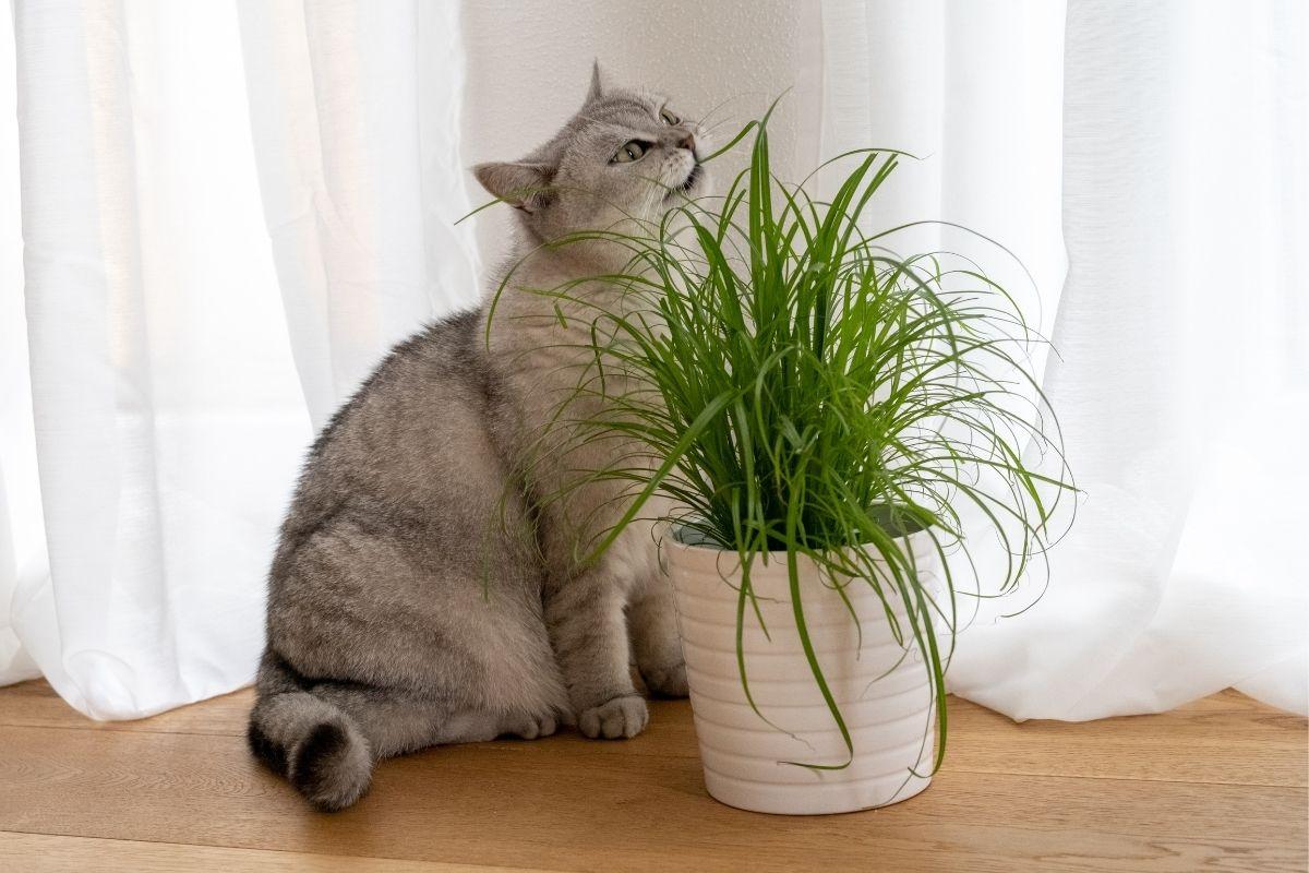 best grass for cats