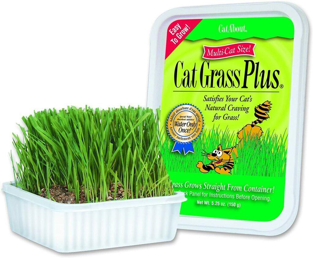 cat about multi cat grass
