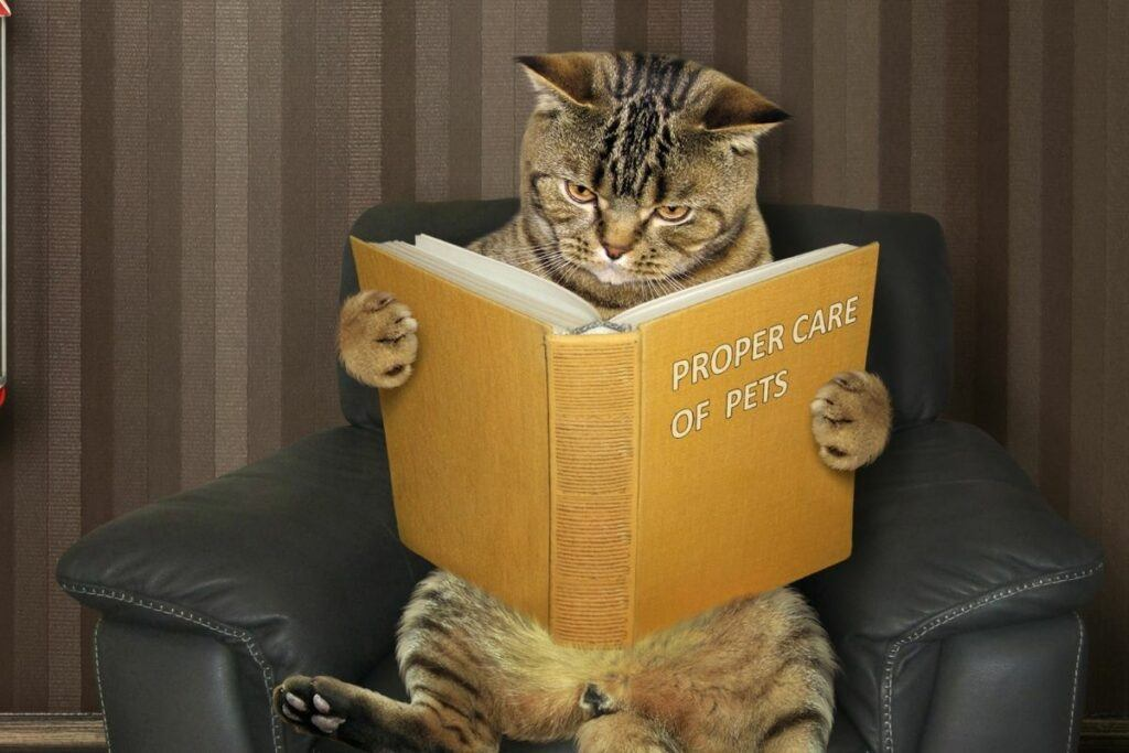 cat reading book-homeopath books for cats