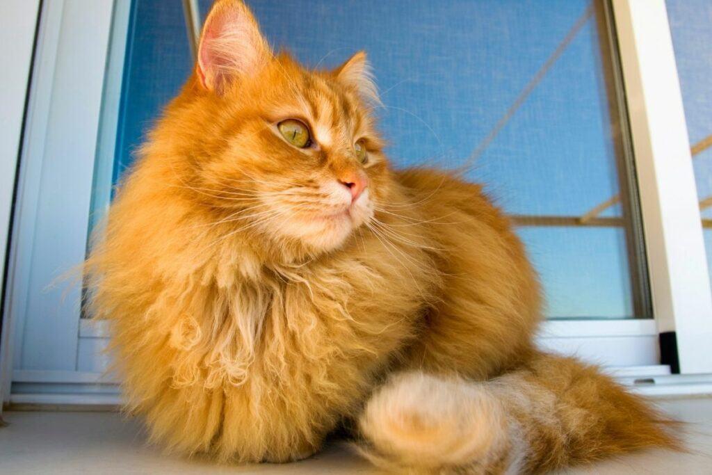 orange forest cat resting on floor