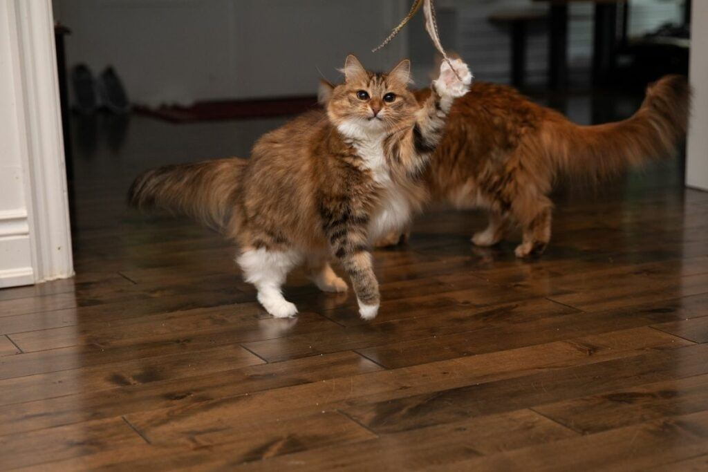 forest cats playing