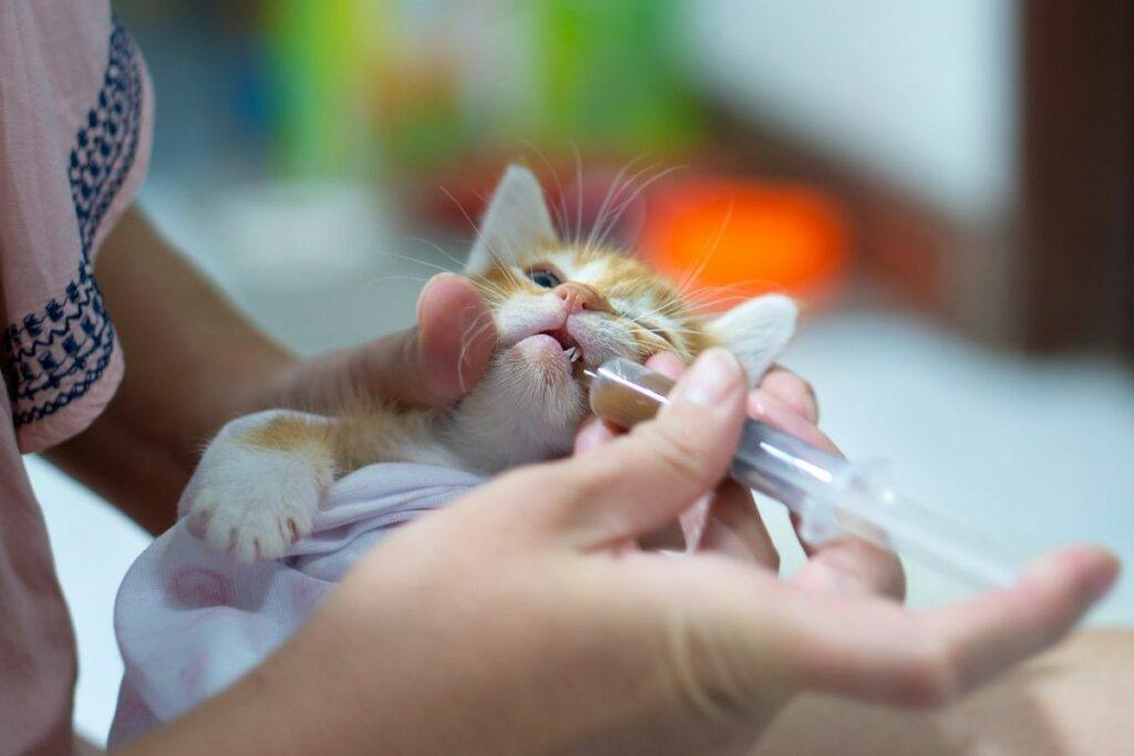 woman using syringe to give cat drops in its mouth
