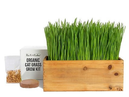 The Cat Ladies Cat Grass Kit with wooden planter