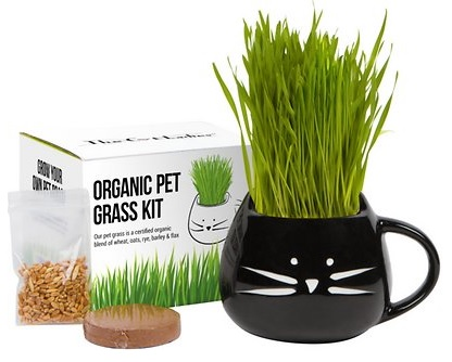 The Cat Ladies Organic Pet Grass Grow Kit with Planter