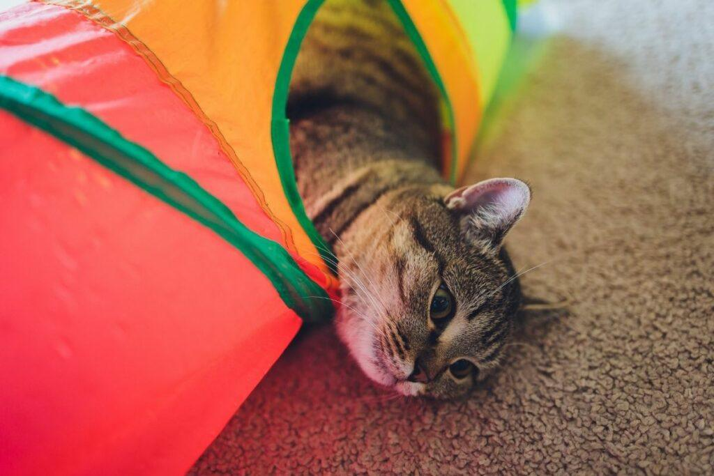 cat enrichment-cat rainbow tunnel