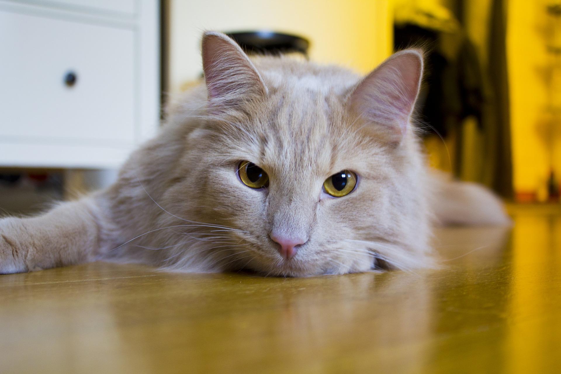 best probiotics for cats