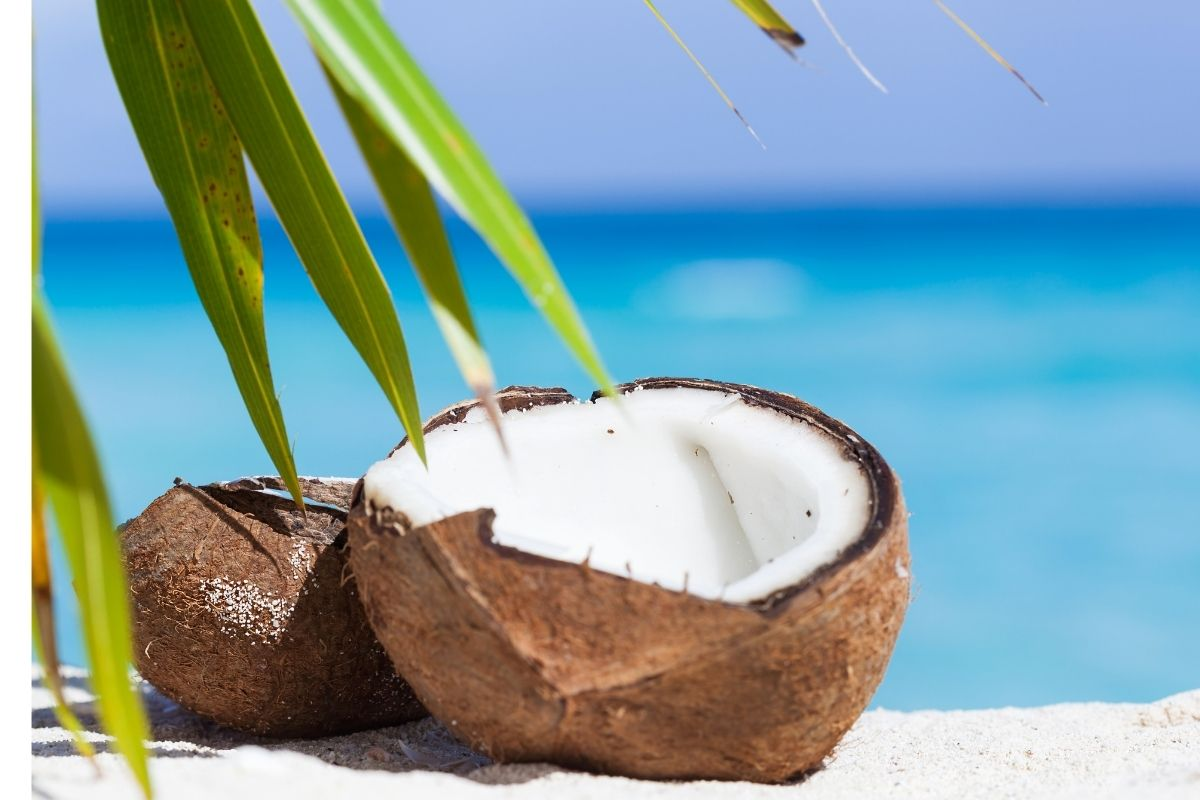 is coconut oil safe for cats
