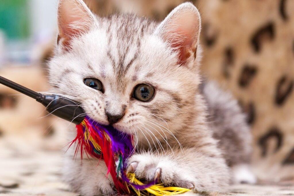 what is cat enrichment-sensory enrichment