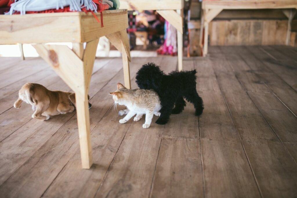 what is cat enrichment-social enrichment