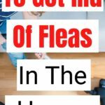 Proven Ways To Get Rid Of Fleas In The House pin
