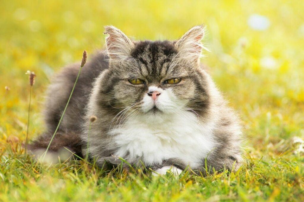 best cat food for kidney disease-what is kidney disease in cats