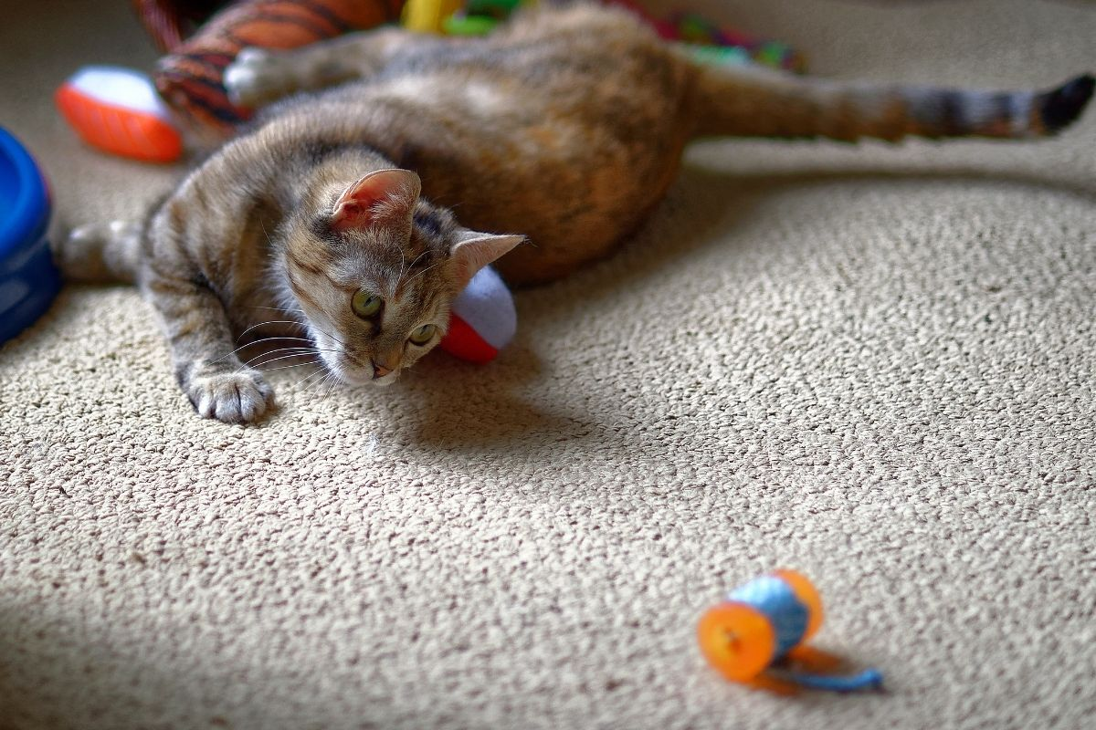 best cat toys for older cats