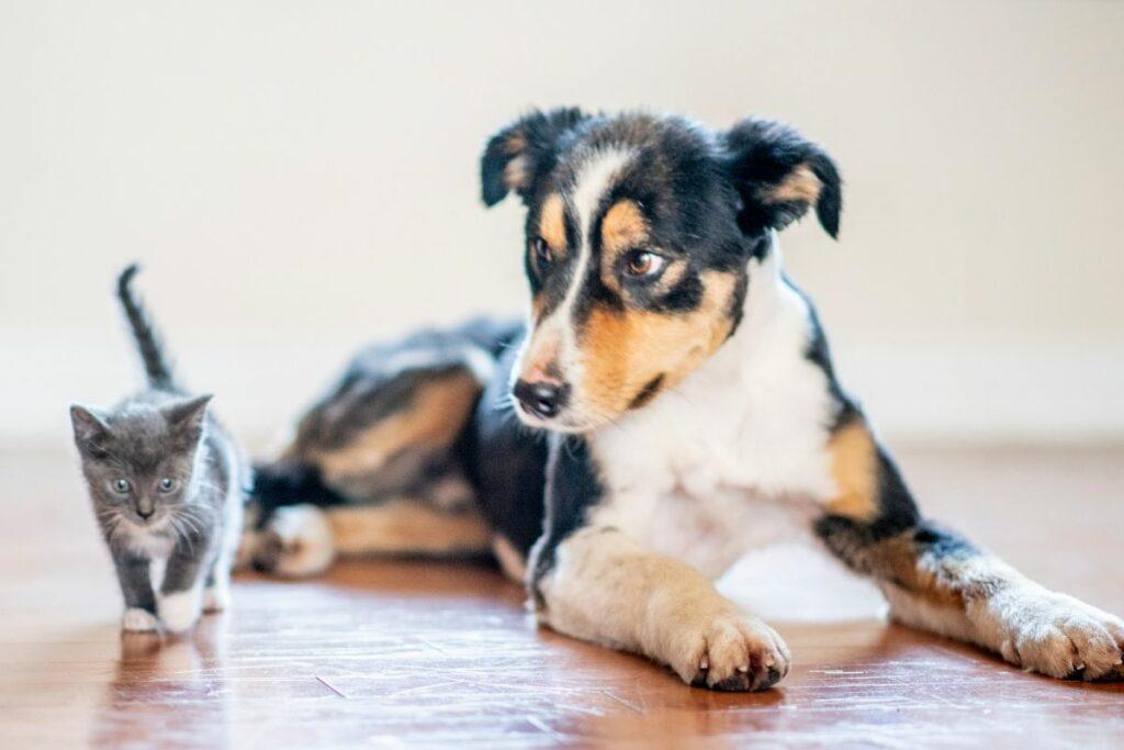 cat and dog sitting on wood floor