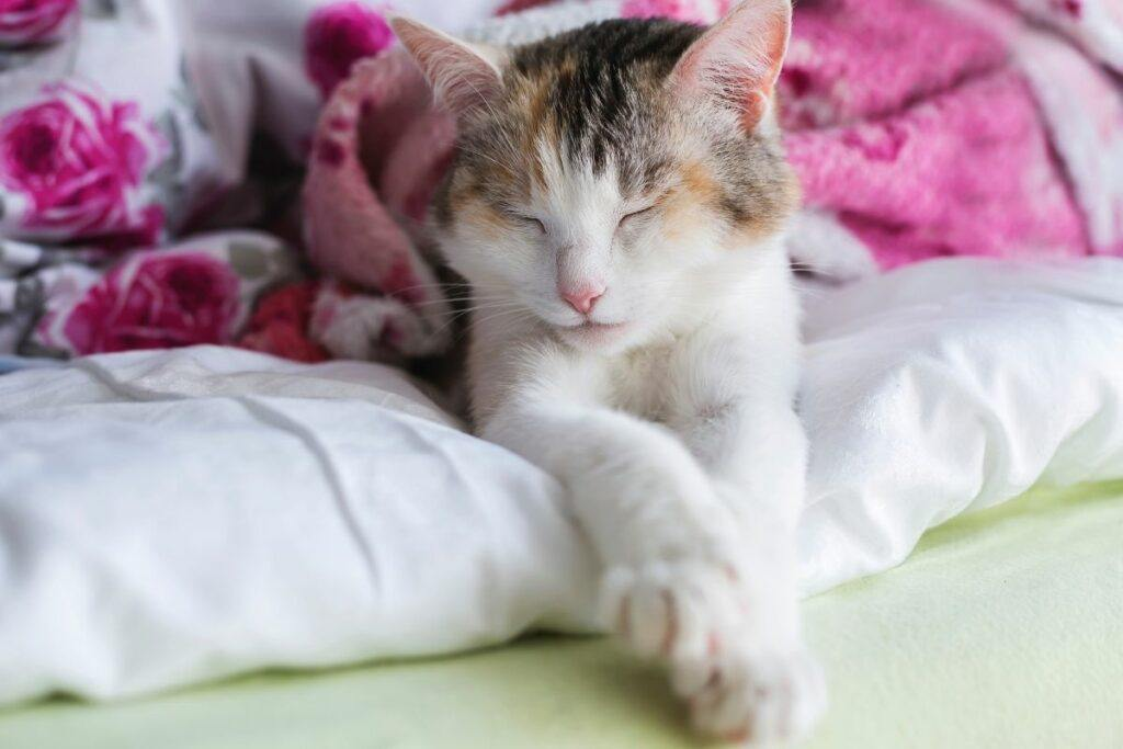 causes of kidney disease in cats