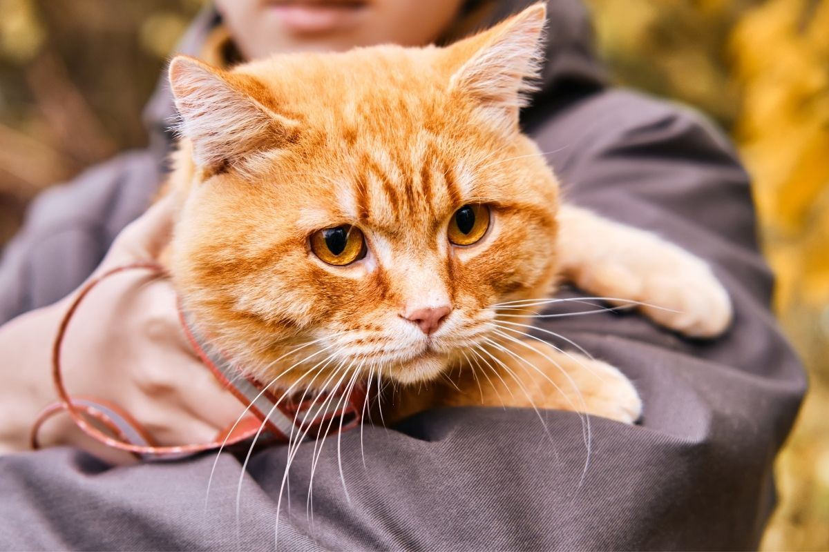 early stage kidney disease in cats