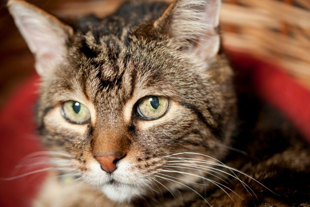 symptoms of early stage kidney disease in cats