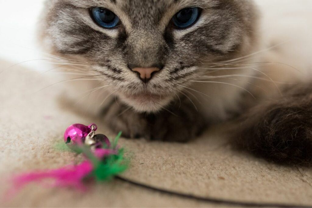 toys for older cats-what to look for
