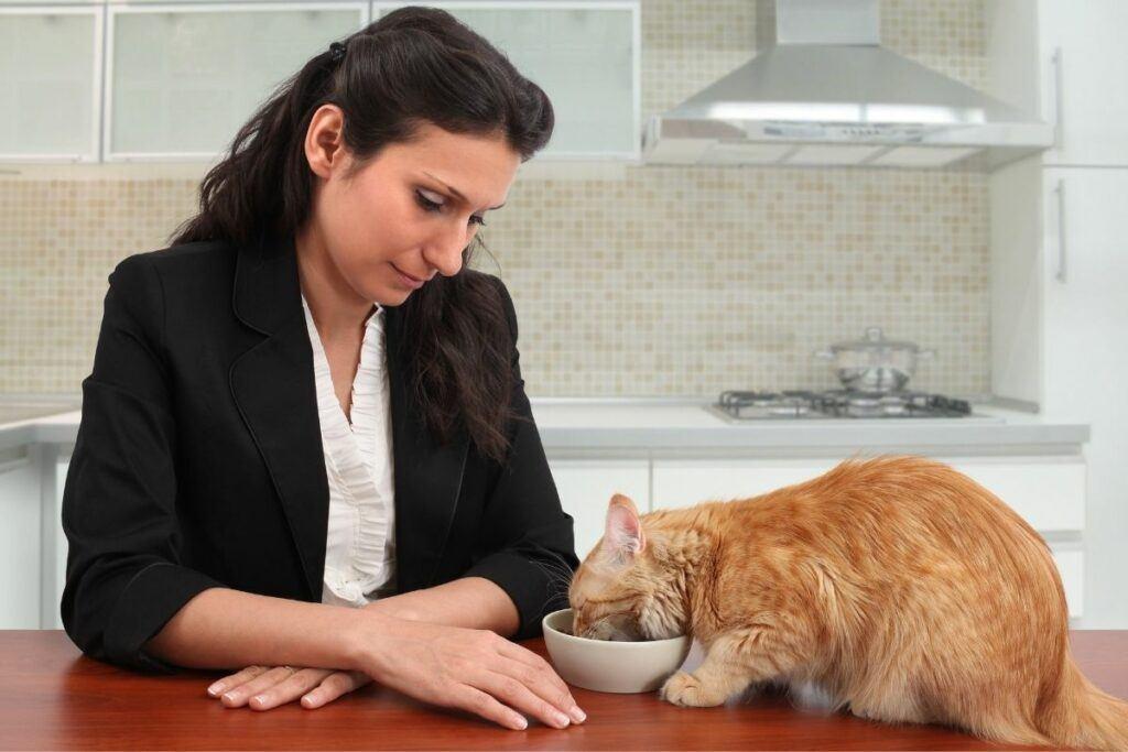 cat sitter feeding a cat