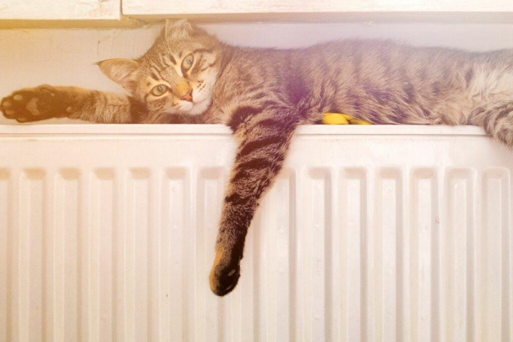 why do cats sleep with you-cats are heat seekers